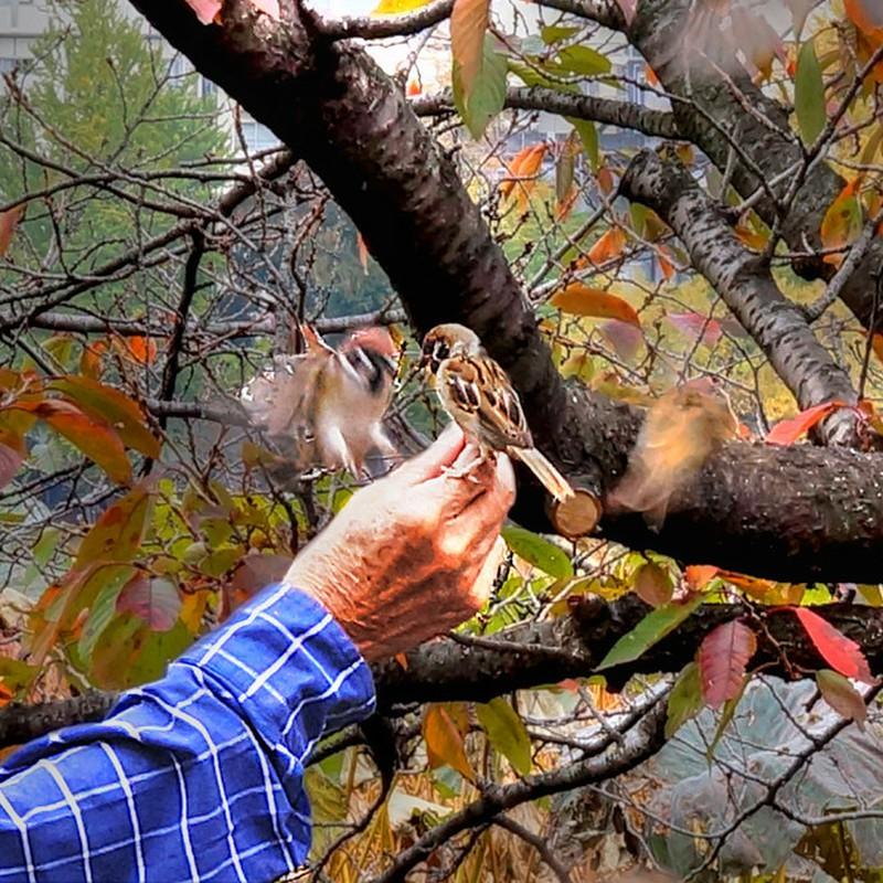 不忍池  すずめに餌付けの秋