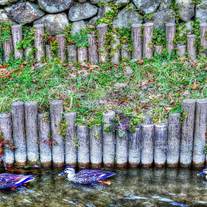 久しぶりの川崎緑化センター(二ヶ領用水)