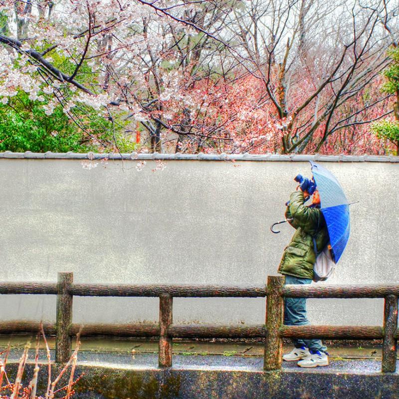 桜の咲撮り(先撮り) 3月26日のこと…