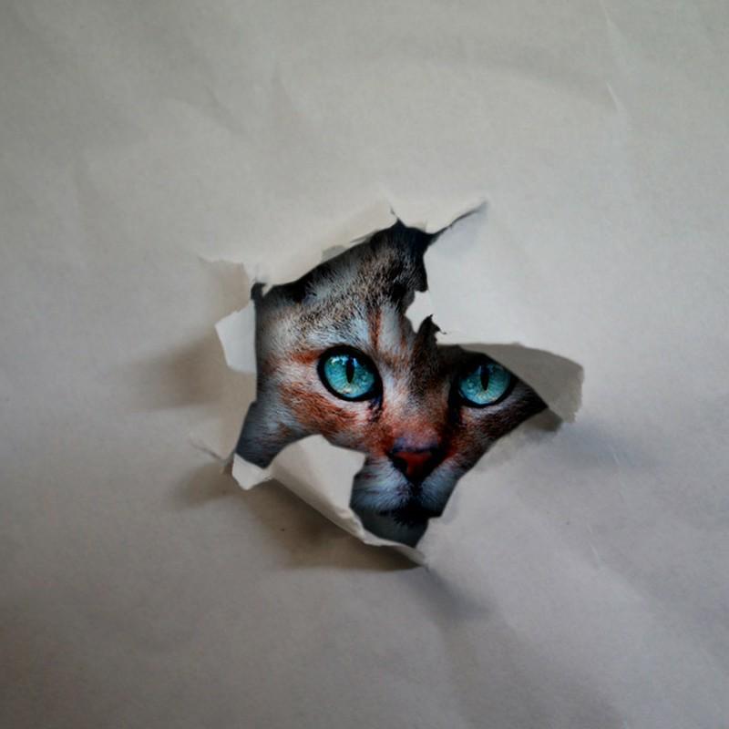 自粛生活・・・って猫が見てますよ。