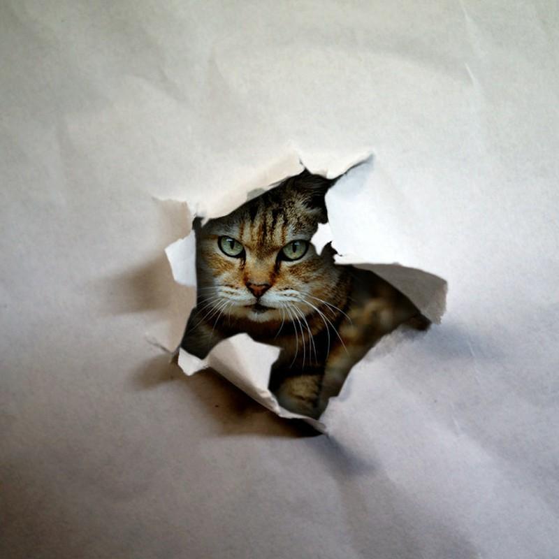自粛生活・・・って猫が見てますよ part 2