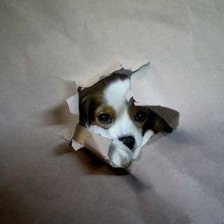 自粛生活・・・って犬が見てますよ。