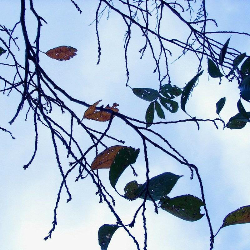 あいかわらずの秋です。