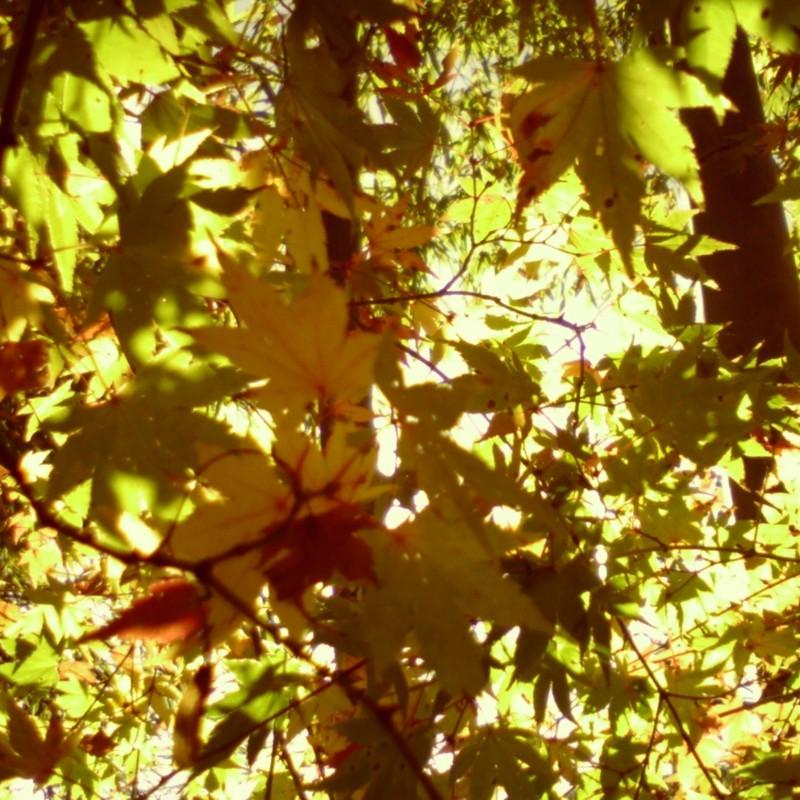 ビスケット色の秋