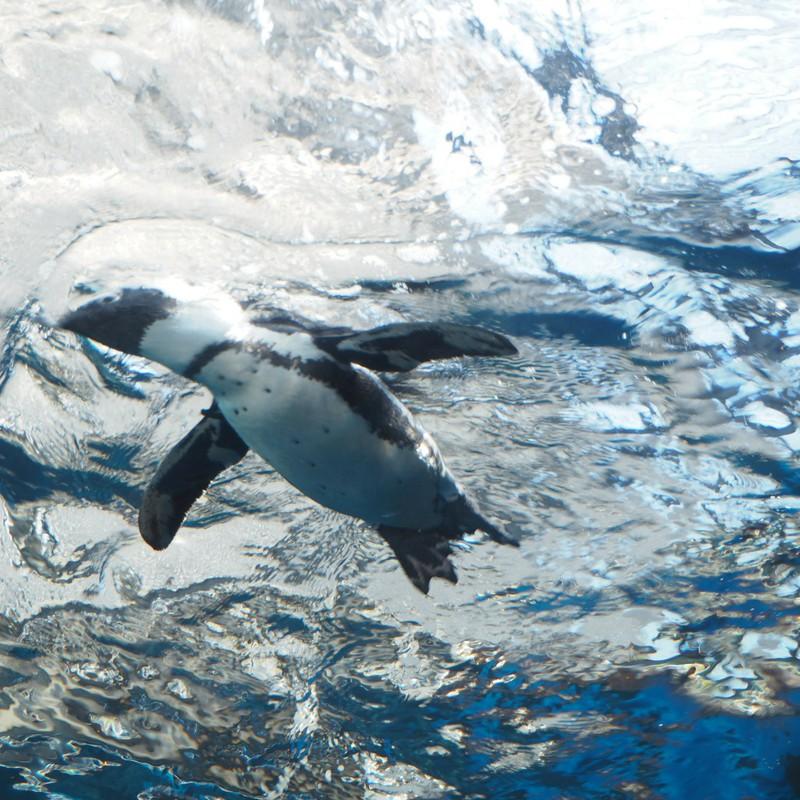 空泳ぐペンギン