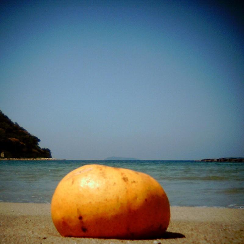 海と夏みかん。