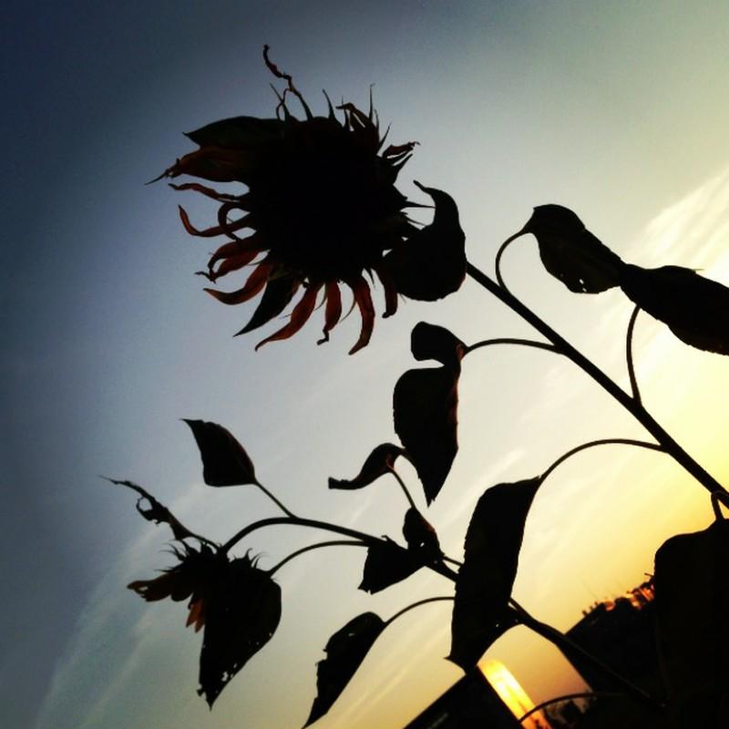 粘る夏、背後の秋