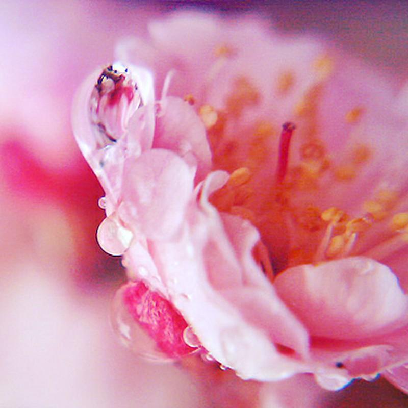 花のカプセル
