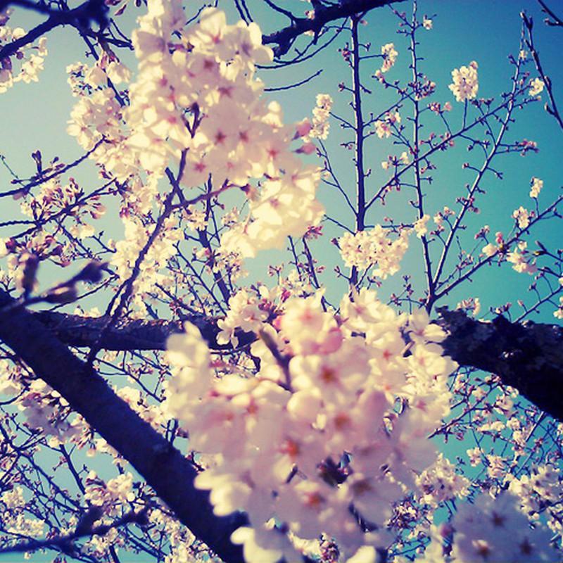 春眠暁ヲ…