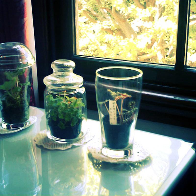 グラス植物