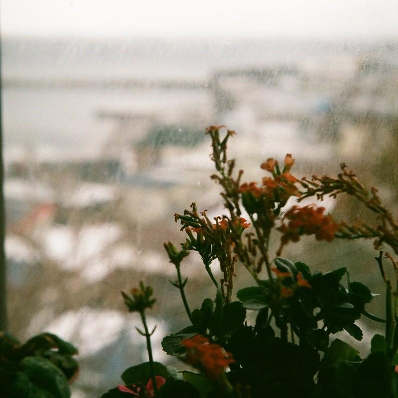 雨正月にしょんぼり