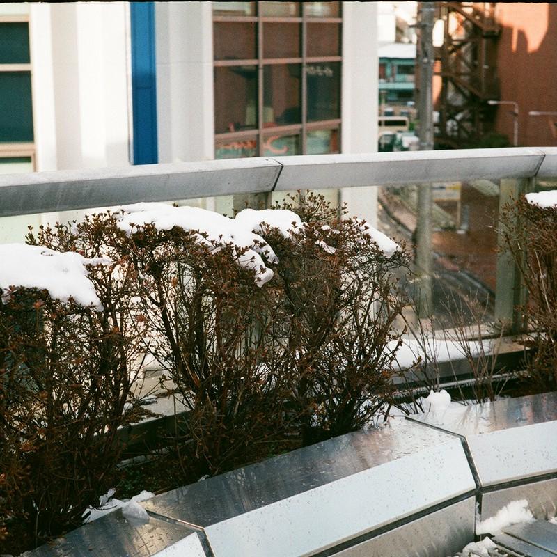 雪の朝(四) / 雪華