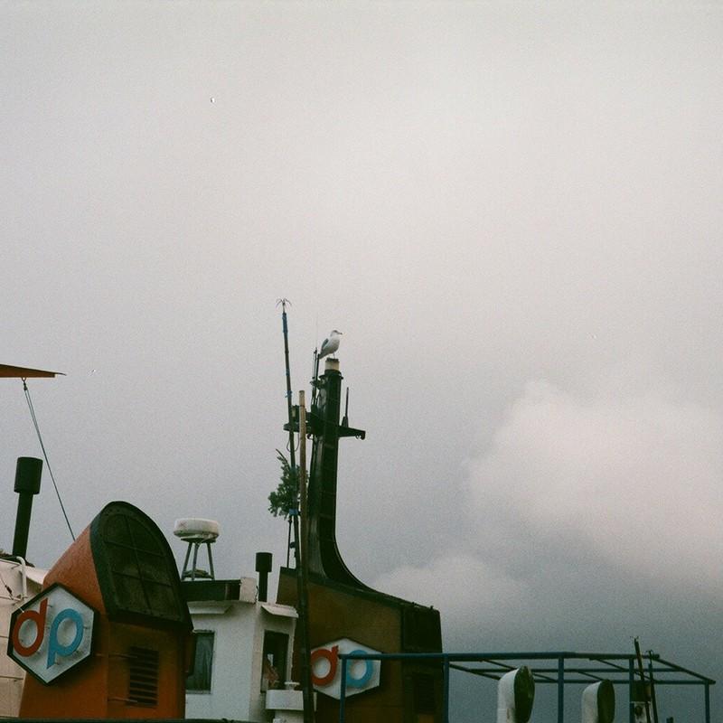 船上のカモメ