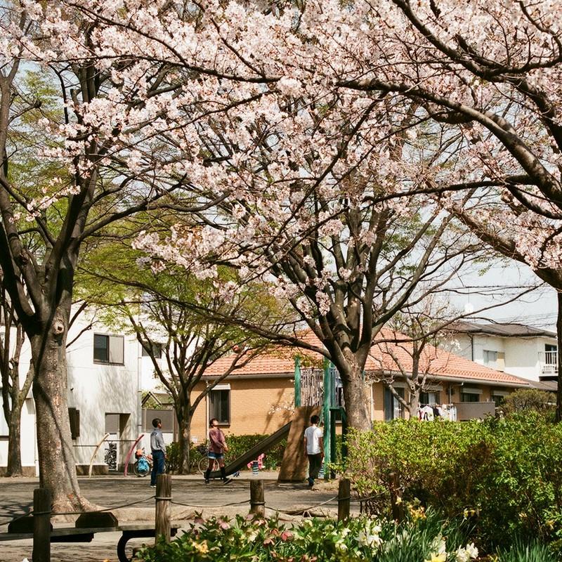花咲く公園にて