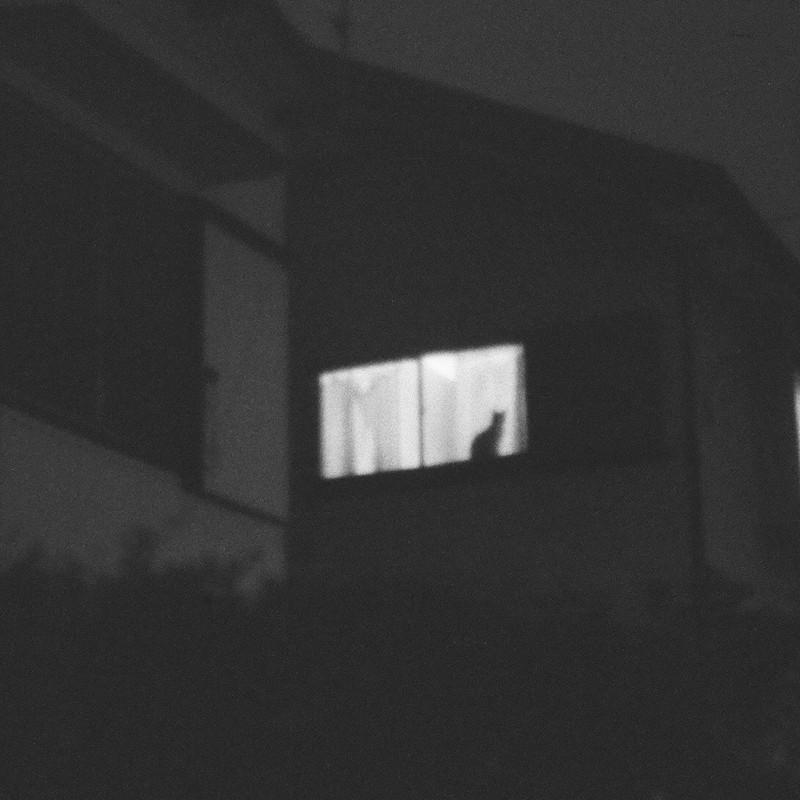 夜窓の令猫