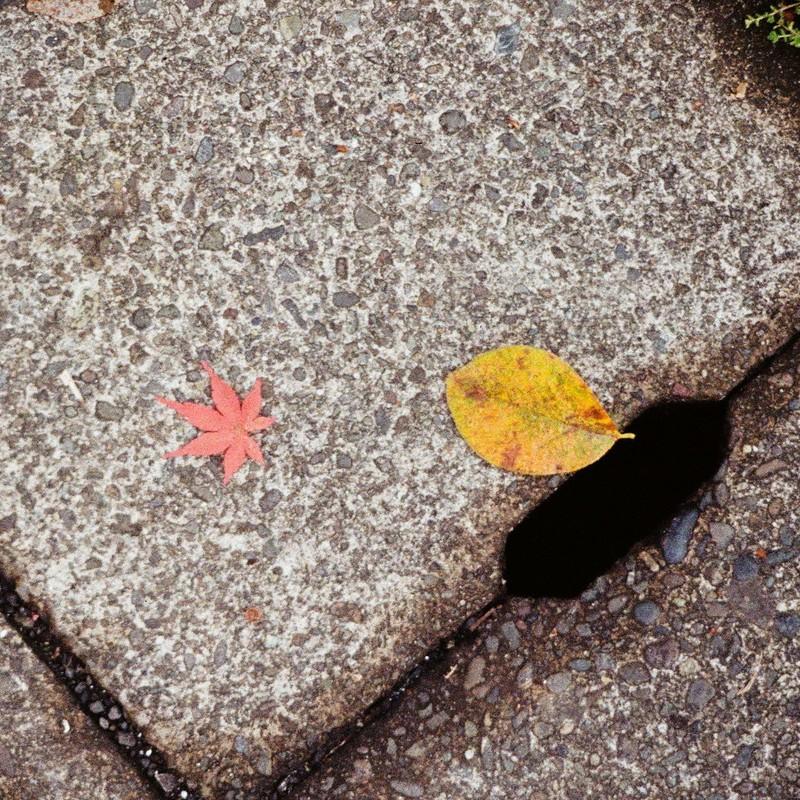冬の葉っぱたち (2)