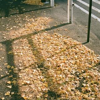 冬の葉っぱたち (3)