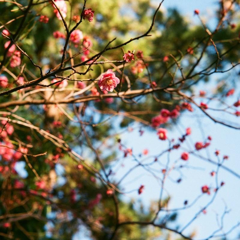 梅の香の候