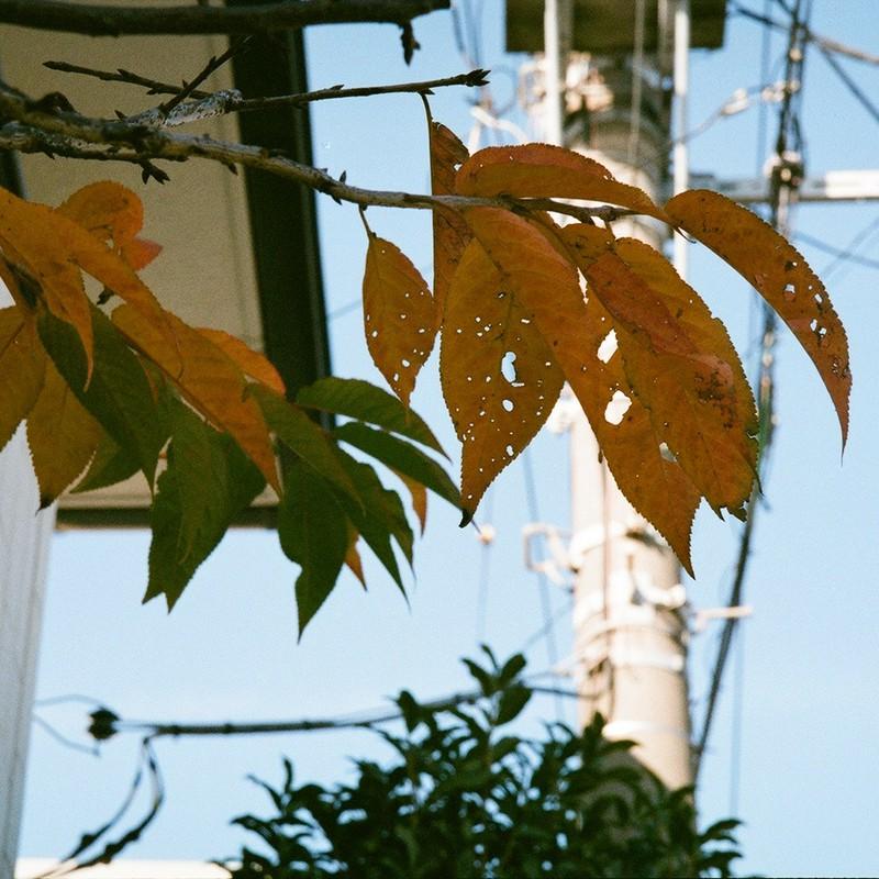 冬の葉っぱたち (4)