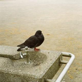 水飲み場の主
