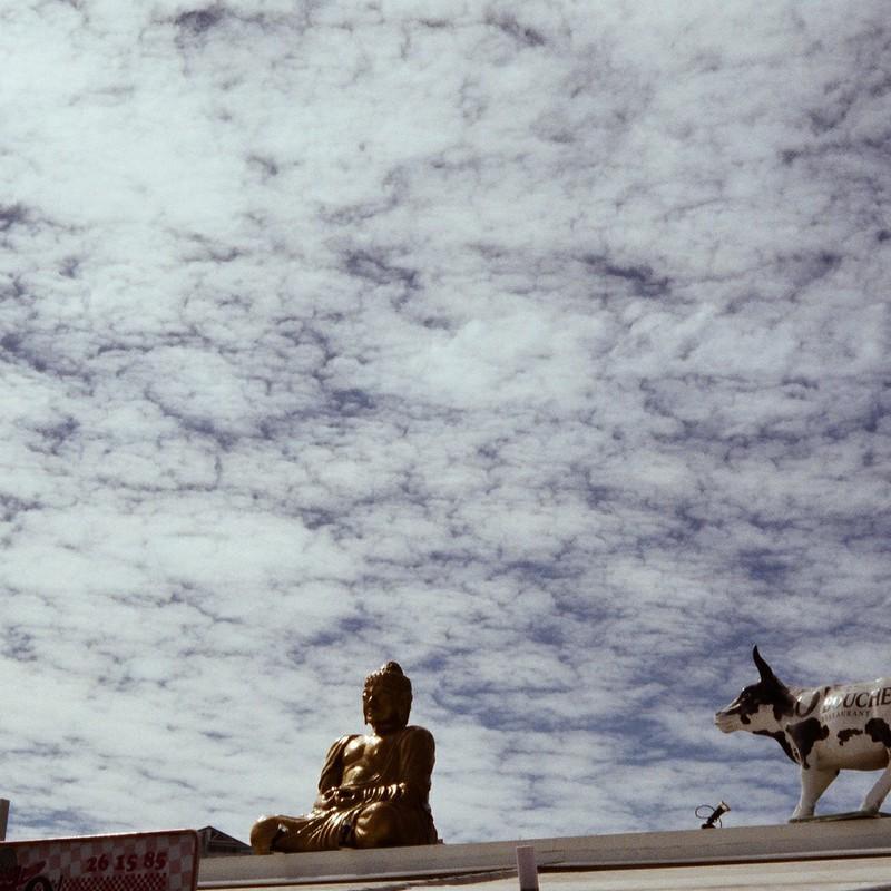 仏像コラボ