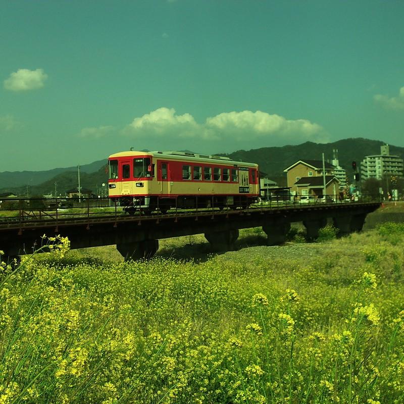 菜の花鉄道。
