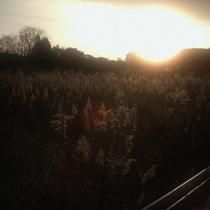 今日の夕陽。