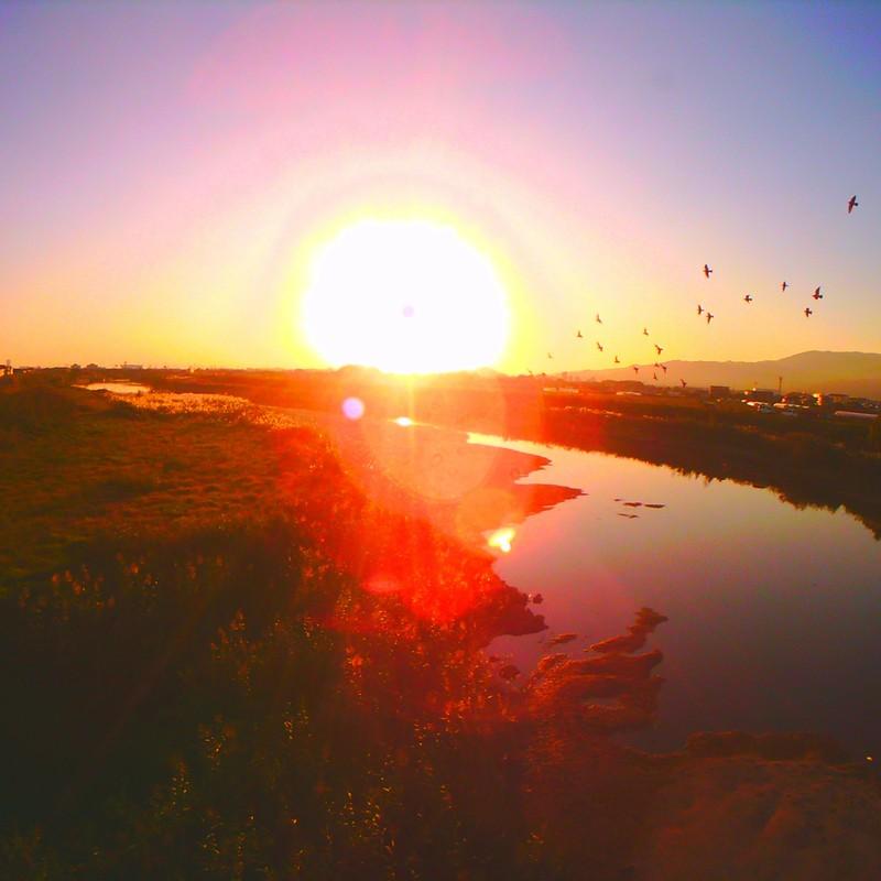 夕陽とハトと。