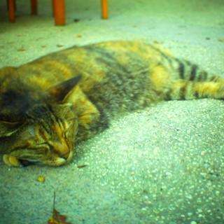 ネコの日。