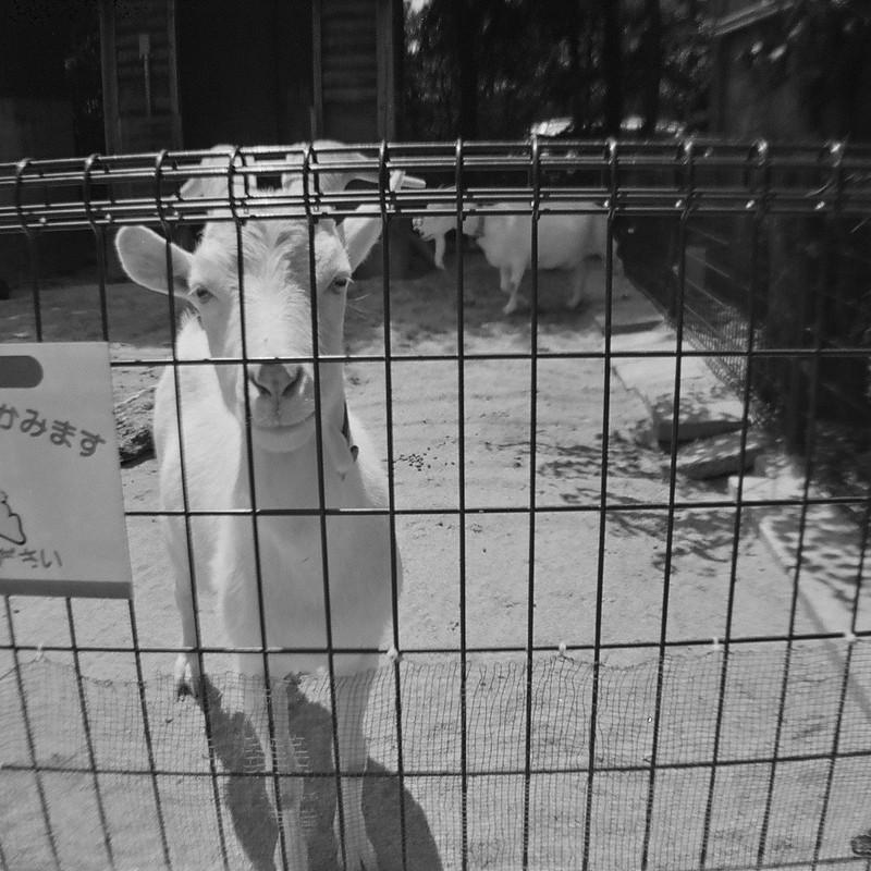 ウサギに注意。