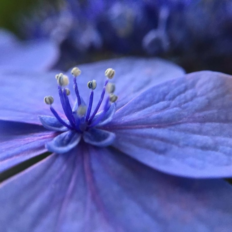 花の命は短くて…