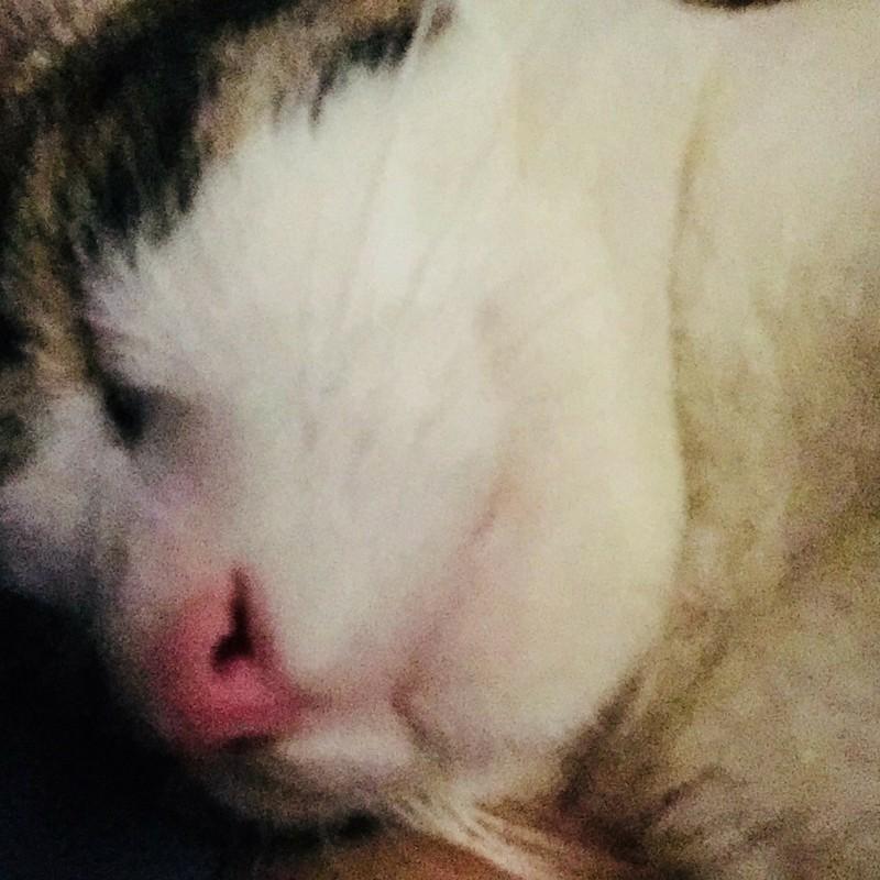 人の肩を枕にして寝る猫