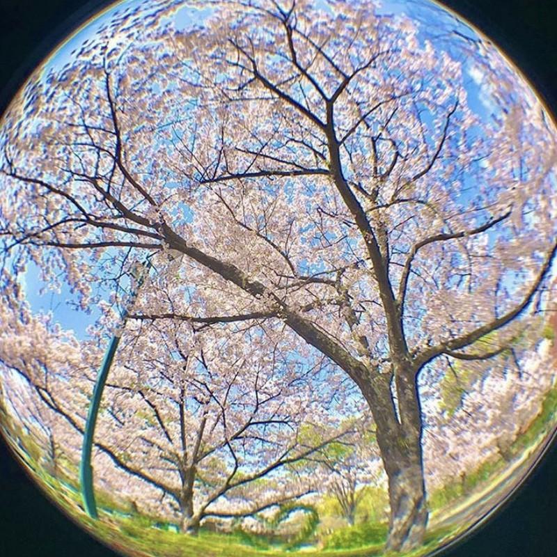 あの頃の桜