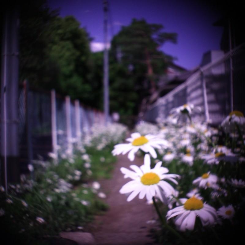 花の咲く小路。