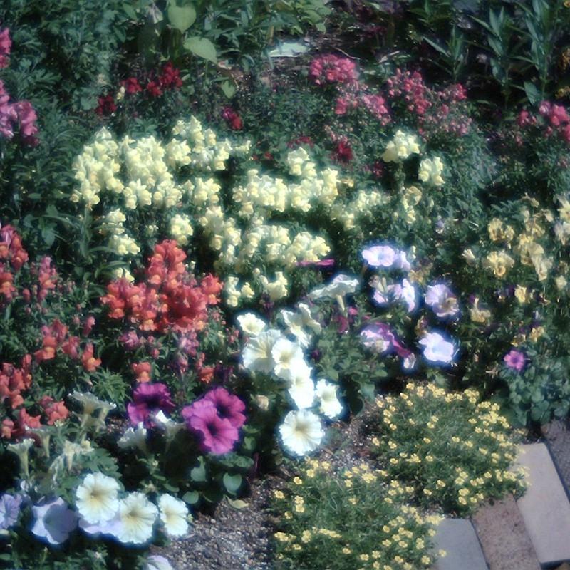 輝ける花壇。
