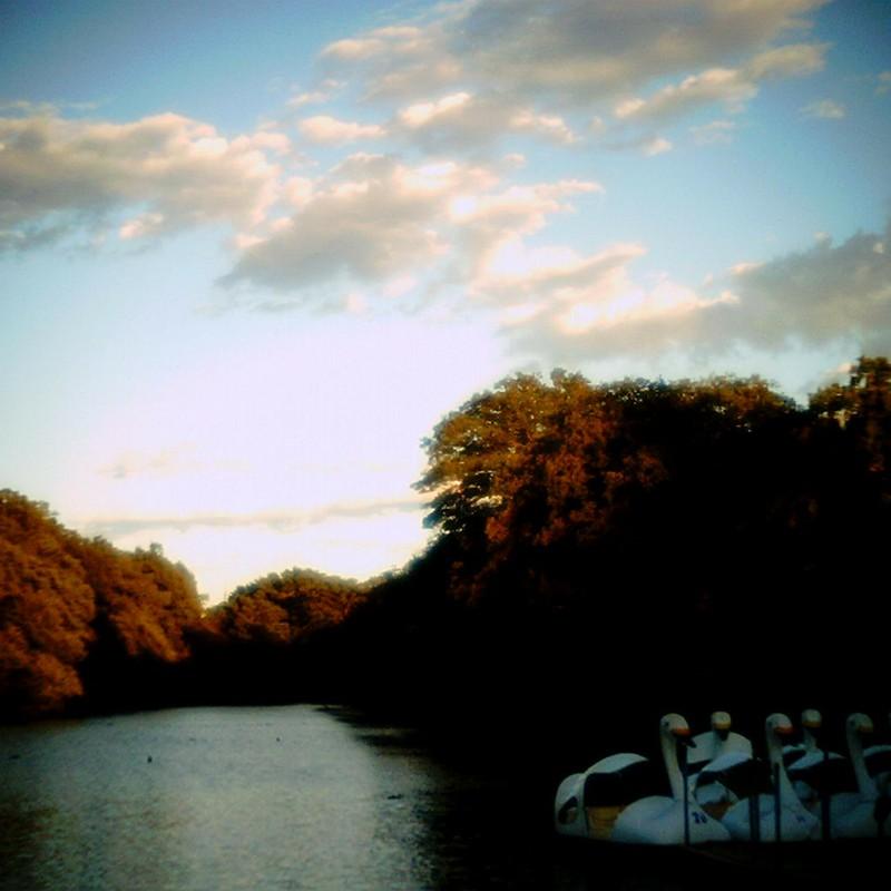 白鳥の湖。