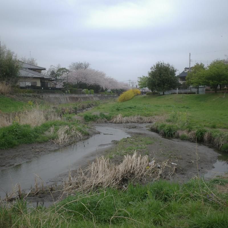 牛池川河畔。