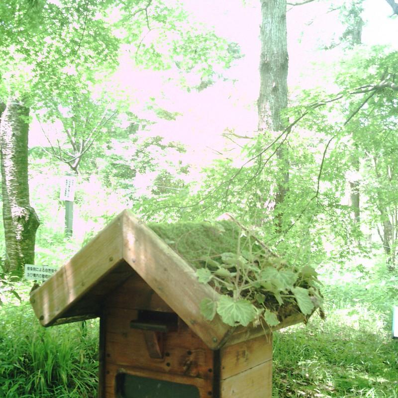 森の募金箱。