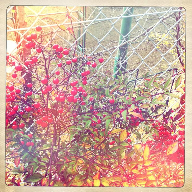 真っ赤な秋。