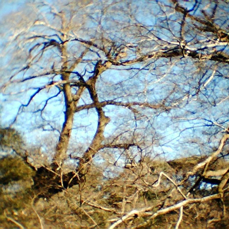 うねる樹木。