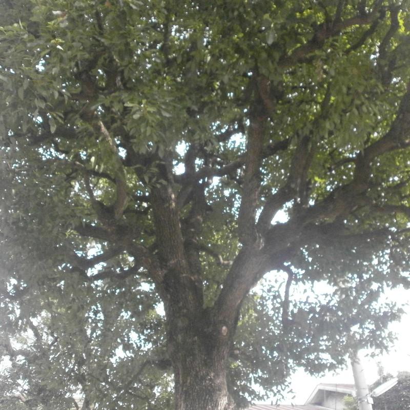 樹の下から