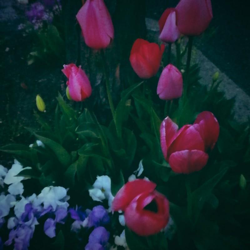 花の路 樹に寄り添い