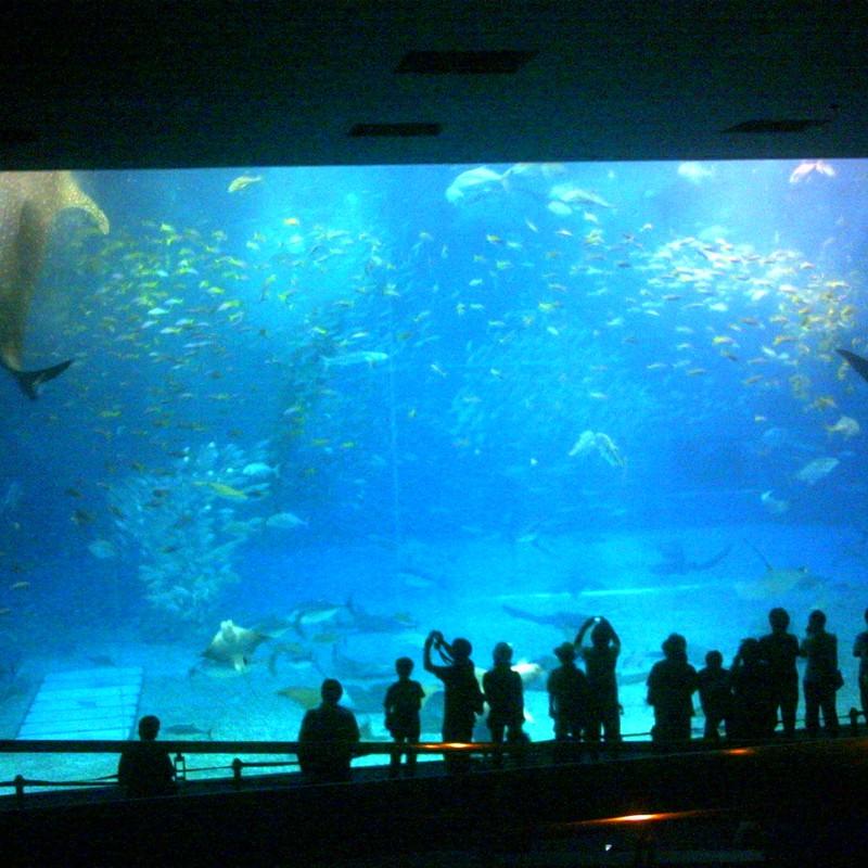 美ら海水族館の巨大水槽~デジタルハリネズミver.~