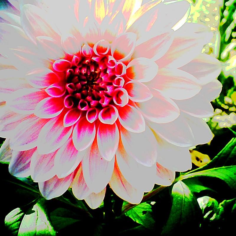 北東北の花シリーズ