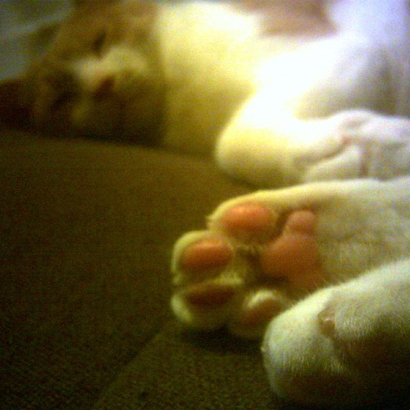 猫カフェ☆熟睡☆