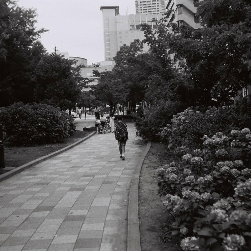Ajisai Street.