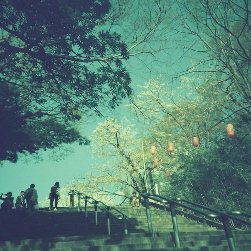 また来年、あの桜の下で
