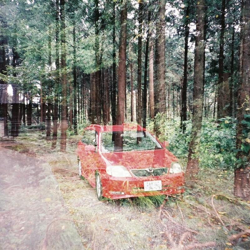 車を隠すなら林の中に