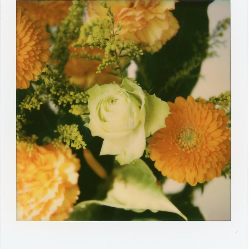 愛は花、君はその種子