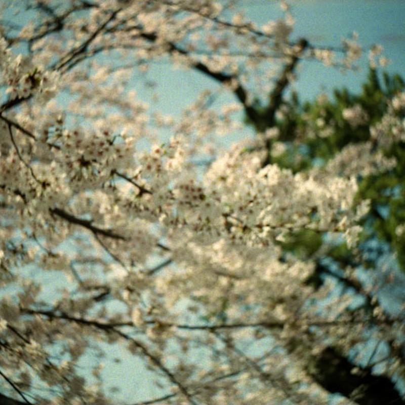 浮桜 その一